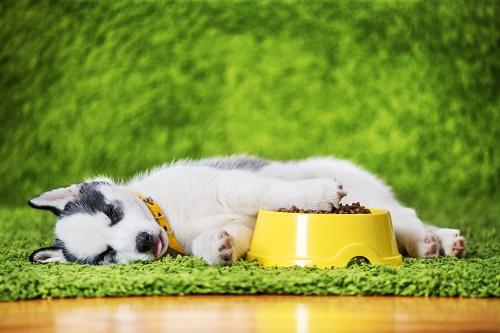 Utiliser le meilleur produit santé naturel chat et chien