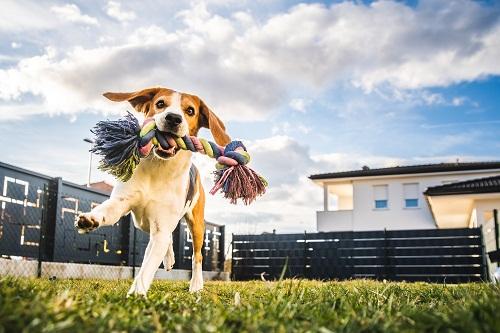un-jouet-pour-mon-chien